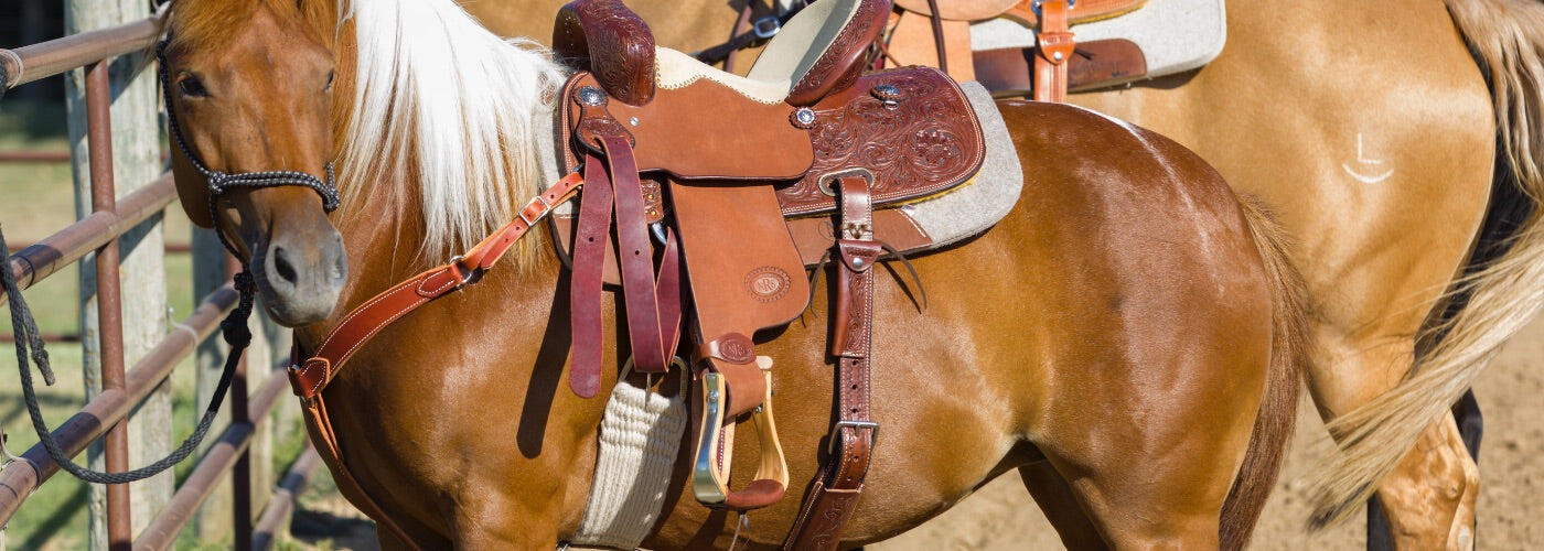 How To Cinch A Saddle: A Guide to the Best Western Cinches