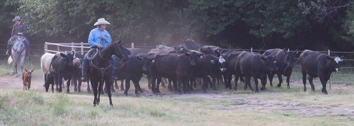 Tips for deworming cattle