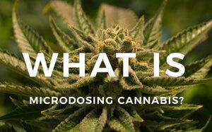 What is Microdosing Dry Herb?